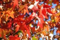 Herbst_2.jpg